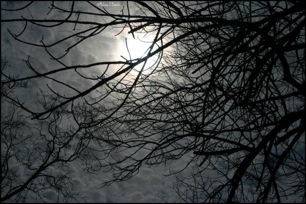 """Dark Sky"""